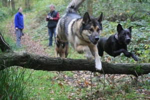 howell wood walk 133